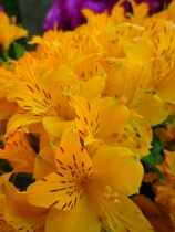 Yellow flowers close up