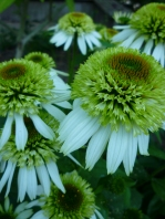 Green Flowers close up