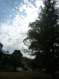 Sky and Clouds and Tree and Building