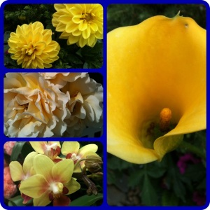 Photo Collage. Flowers.
