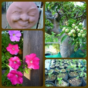 Photo Collage. JT Bonsai