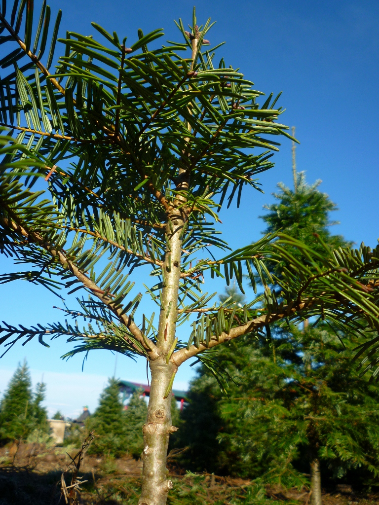Tree Farm Ants Eye View