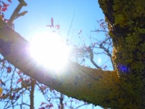 Aptos sunshine