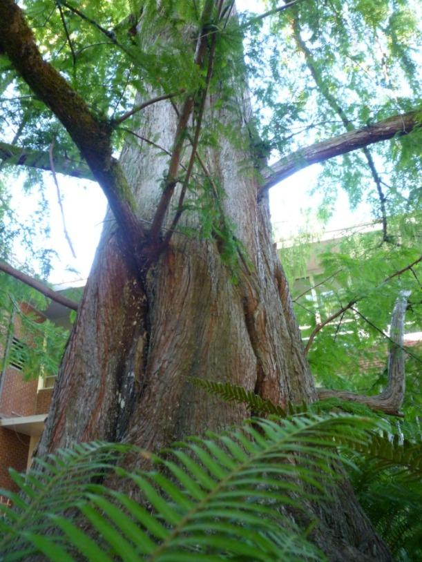 Tree(s)