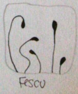 Fescu