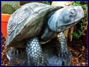 Garden Turtle Morro Bay CA