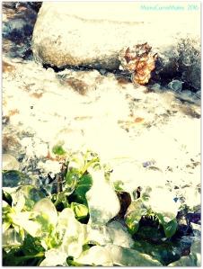 Frozen Flora Camas WA