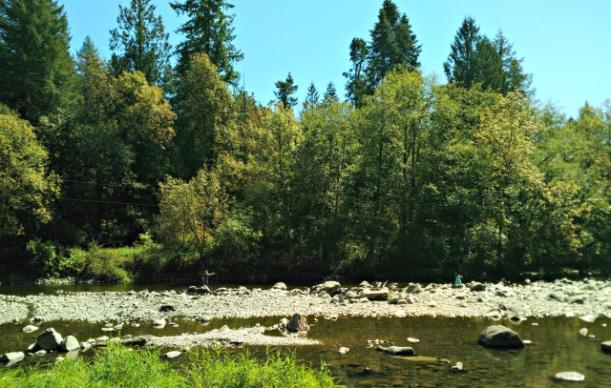 lewisvillepark_forest_adventure_wa-1