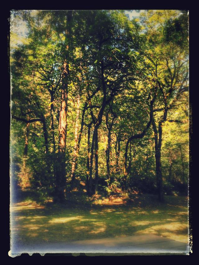 lewisvillepark_forest_adventure_wa-2